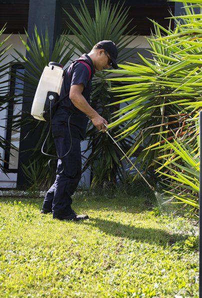 Man spraying solution for grass