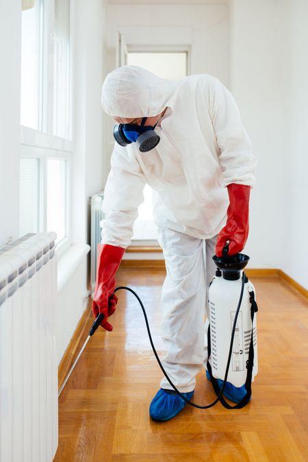 Men spraying solution for pest control